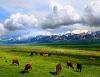 絕色北疆~典藏花季 伊寧薰衣草、 喀納斯、那拉提、巴音布魯克深度12天(伊寧出   含小費)