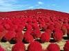 紅色幸福球~掃帚草、日光東照宮、仁醫大內宿、那須纜車五日